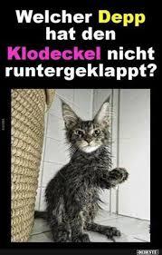 Welcher Depp Hat Lustiger Tiere Witzig Katzen Witze Lustige