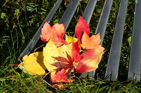Fall Landscaping 100 Fall Landscaping Tips Best 25 Inexpensive Landscaping