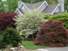 Small Picture Too many trees not enough garden Japanese maple Small trees