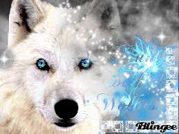 white wolf pup with blue eyes. Brilliant White On White Wolf Pup With Blue Eyes F
