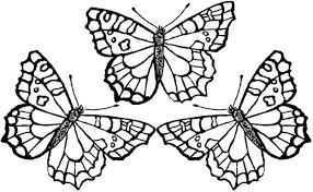 printable butterfly coloring pages. Delighful Coloring Butterfly Color Pages Coloring Printable Intended O