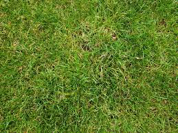 tall grass texture seamless. Grass Texture 5 By Visualsnacktm Tall Seamless