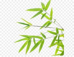 green and white background design png. Simple White Bamboo Leaf Green Wallpaper  Leaf Background Design Throughout And White Background Design Png T