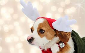 cute christmas puppies. Delighful Cute Cute Puppies Christmas  Inside L