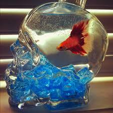 skull vodka uncut liquor bottle aquarium w plant blue stones
