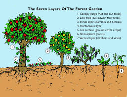 The Step By Step Guide To Creating Your Forest Garden