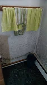 bathroom mold removal products. Mold On Bathroom Walls Removal Products S