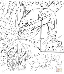 chameleon in zoo coloring page zoo animals coloring pages free printable pictures on zoo coloring sheets