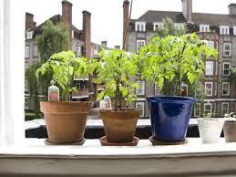 5 tips for growing awesome tomatoes in containers container gardening tips