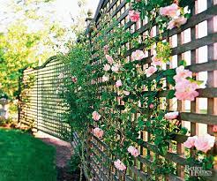 privacy landscaping ideas to try in