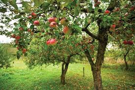 Michigan Fresh Growing Tree Fruits At Home E3173  MSU ExtensionWhat Fruit Trees Grow In Michigan