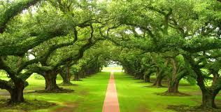 Resultado de imagen para dos árboles