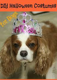 want your dog to get into the spirit why not make them a simple yet fun costume here are 5 diy costumes for dogs