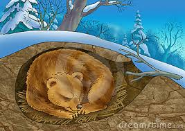 Image result for hibernating clipart