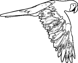 Small Picture Parrot Coloring Pages Wecoloringpage