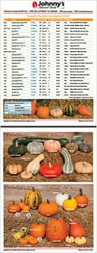 Pumpkin Varieties Chart How To Choose Fall Cucurbits Johnnys Selected Seeds