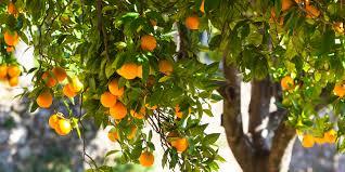 Diamond Econetting 10m X 10m X 5mm White Anti Bird Net  Bunnings Fruit Tree Netting Bunnings