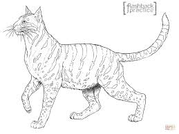 Andean Mountain Wildcat Coloring Page From