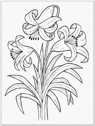 Spring Flower Coloring Pages Free Spring