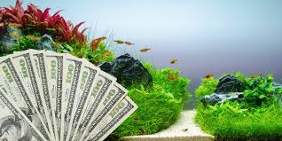 reading time 9 min how much does it cost to create an aquascape aquarium