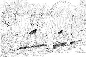Small Picture Big Cat Coloring Pages