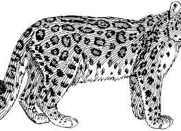 Leopard Coloring Pages Printable Jokingartcom Leopard Coloring Pages