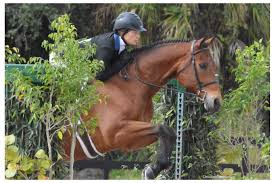 News Show Jumping Hunter Jumpers Illinois Horse Shows