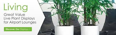 office plant displays. Delighful Office Resell Plant Displays For Office Centres In