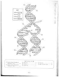 DNA Replication Coloring Worksheet on Dna Coloring Worksheet ...