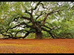 the importance of trees the importance of trees