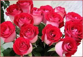 Картинки по запросу красивые розы картинки