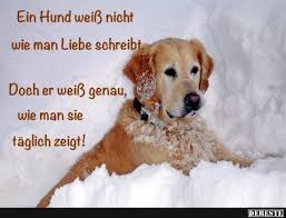 Schöne Hundesprüche Und Zitate Handstedenu