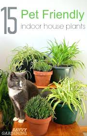 plants that are not toxic to cats non toxic plants for cats plants and pets always