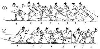 Попеременный четырехшажный ход Переход с попеременных ходов на  Переход с попеременных ходов на одновременные Выход со склона и преодоление