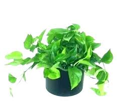 common house plants names green plants names decoration low names of common indoor house plants tall