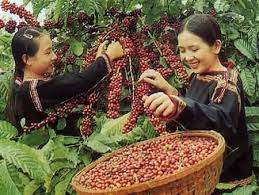 <b>Вьетнамский кофе</b>