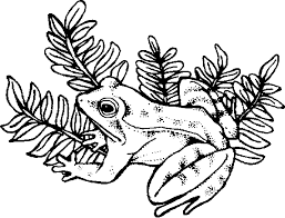 Small Picture wildlife coloring pages PHOTO 83436 Gianfredanet
