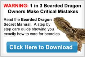 Bearded Dragon Names For Your Bearded Dragon Pet Bearded