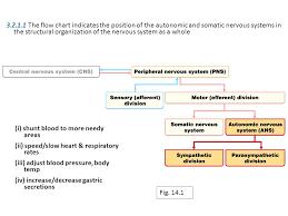 Cns Pns Chart Homeostasis Homeostasis Control Mechanisms Sept 30 Oct 03