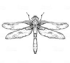 стрекоза черный эскиз насекомых стоковая векторная графика и