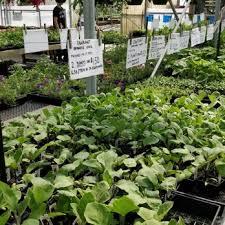 nurseries gardening in vancouver bc