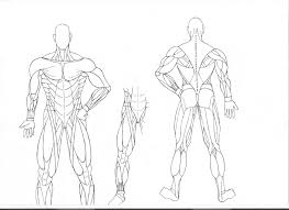 Small Picture Muscle Coloring Pages Anatomy Muscles Muscular System Colouring
