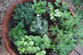 Using Drought Tolerant Perennials In Your Herb GardenContainer Herb Garden Plans