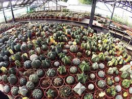 กระท่อมลุงจรณ์ @ปทุมธานี   พืชอวบน้ำ, การปลูกพืช, ไอเดียแต่งสวน