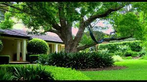 Small Picture Garden Design Sydney Living Colour Landscapesavi YouTube