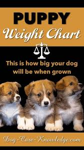 Havanese Growth Chart Puppy Weight Chart This Is How Big Your Dog Will Be Dog