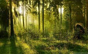Summer Forest Backgrounds HD Wallpapers ...