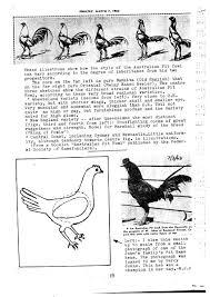 Backyard Poultry Forum View Topic Australian Pit Game