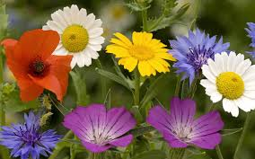 most beautiful wallpaper download. Simple Most Most Beautiful Flowers In The World Image On Wallpaper Download C