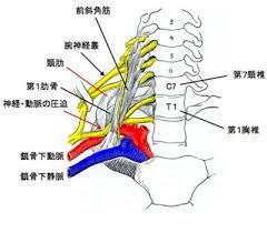 頚 神経 叢